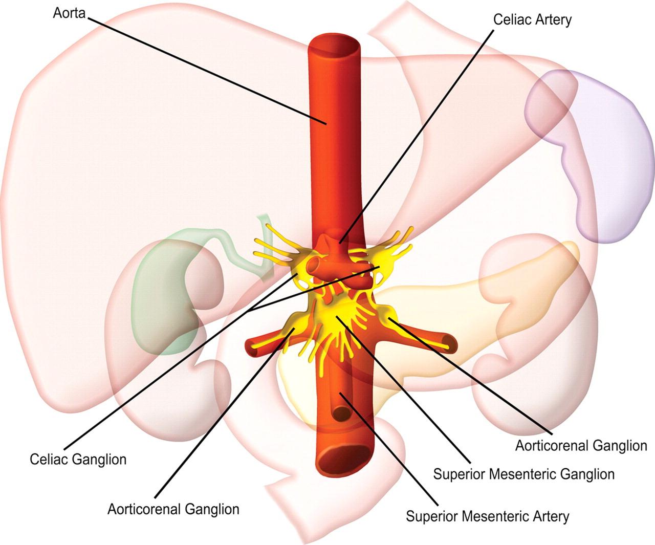 neurolysis, նեյրոլիզ, արևային հյուսակի